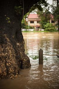 A tree between river and road along River Road