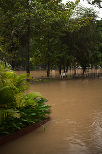 Siem Reap River has spilled over into the appropriately named River Road and up the driveway of our hotel's porte-cochère.