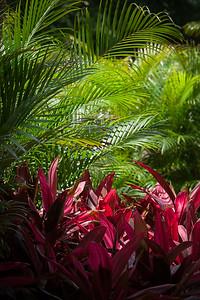 The Ritz-Carlton, Kapalua has a similar assortment of plants