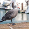 It's a pretty standard picture I know. But when I see a seagull posing so nicely I just gotta take its picture! LoL