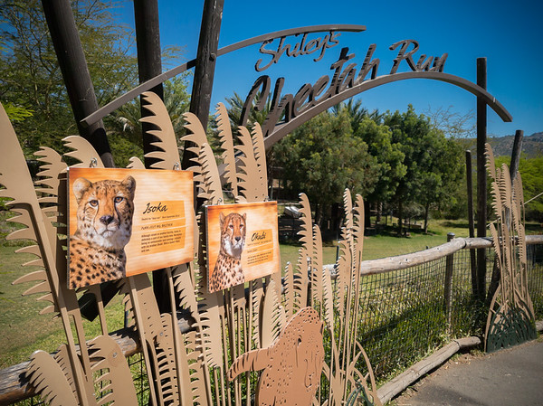 The signage for the Cheetah Safari is a bit confusing...we first saw a sign by the Africa Tram, but it really was indicating that the run was further up the path.  It was located there because you could buy tickets for the Cheetah Safari at the booth next to the tram.  Today's runners will be the brothers Isoka and Okubi.