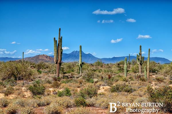 Arizona 38 0413