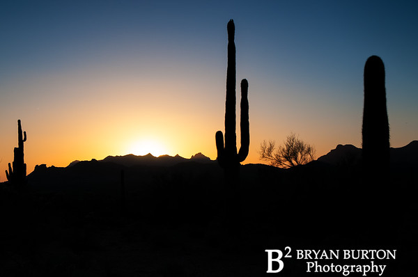 Arizona 52 0413