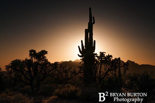 Arizona 47 0413