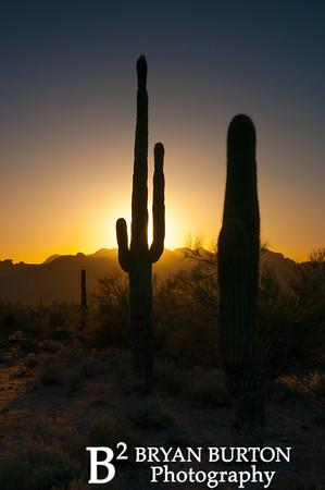 Arizona 50 0413