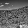 Arizona 40 0413