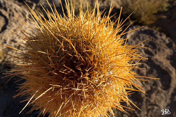 A Cactus Life