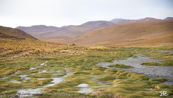 Altiplano Meddow