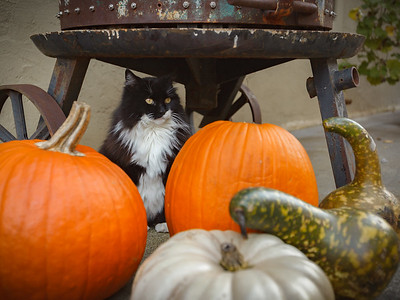 Black cats and pumpkins...and it is not even Halloween!