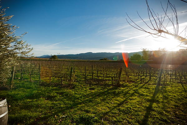 Harvest happened months ago...December is far from the ideal time for photopraphing a vineyard