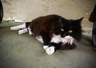 Fat cat...I wonder if it is preggers