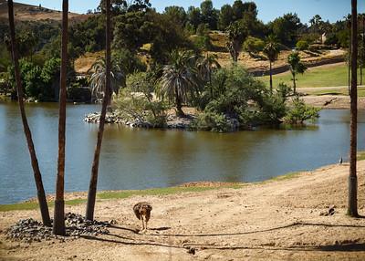 Circling the lagoon