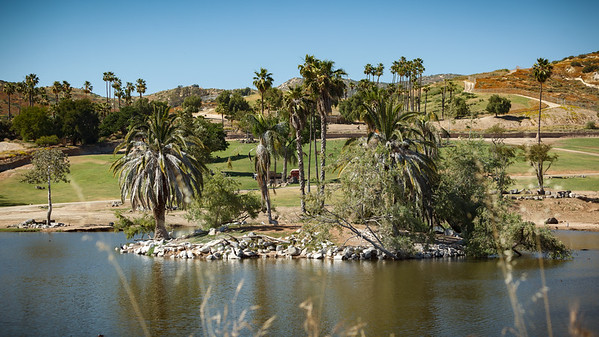 This particular lagoon lies at the southernmost tip of the San Diego Zoo Safari Park.  These features cannot be seen from any of the walkways or even the Caravan Safari trucks...so one must take the tram to see the animals that congregate here
