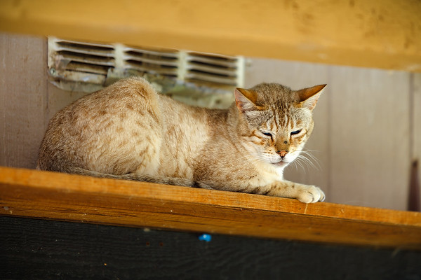 One of the cats watches us as Lynea tells us about the FIV Ward.