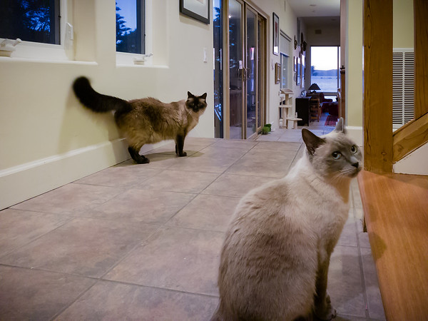 Milo and Ellie...the welcoming committee