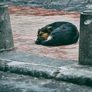 Sidewalk Nap