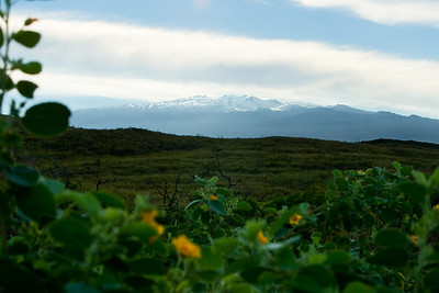 As Highway 19 turns eastward, we see the snow-covered peak of Mauna Kea Volcano for the first time (note the observatories to the left of the summit)
