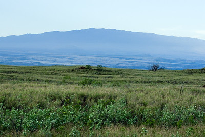 I think this is Hualalai, the Big Island's third youngest and third-most historically active volcano