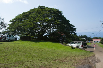 Henri, Valerie, and I drive to Greenwell Farms in Kealakekua to learn about how they produce (and hopefully sample) Kona Coffee