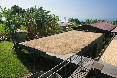 The roof can slide to completely cover the berries...useful because it typically rains during the afternoon on these hills overlooking the Kona Coast