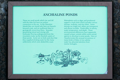 A nearby plaque describes this type of pond