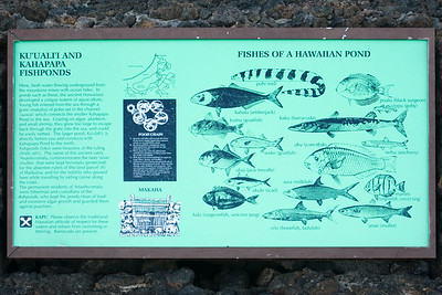 A description of the fish found in the ponds around the hotel