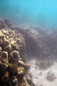 I come across complete barriers of coral that I cannot safely swim over