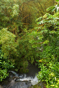 I personally am hoping the sun will come out, but clouds do change the look of this lush rain forest