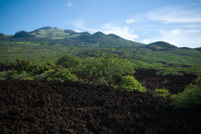 The cinder cones dotting the southern slopes of Haleakala are green with life