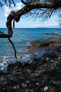 Molokini through a gnarly tree