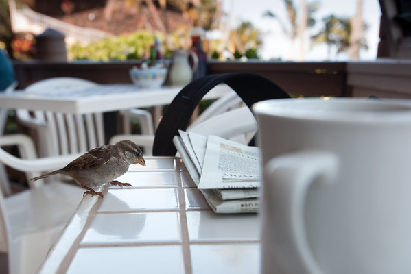 A little birdie lands on my table...