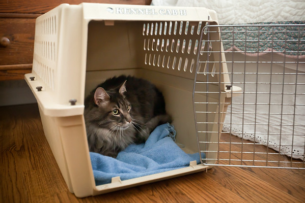 Mushu quickly exits the carrier and refamiliarizes himself with the surroundings