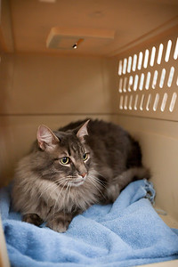 Meeko takes his time coming out of the kennel