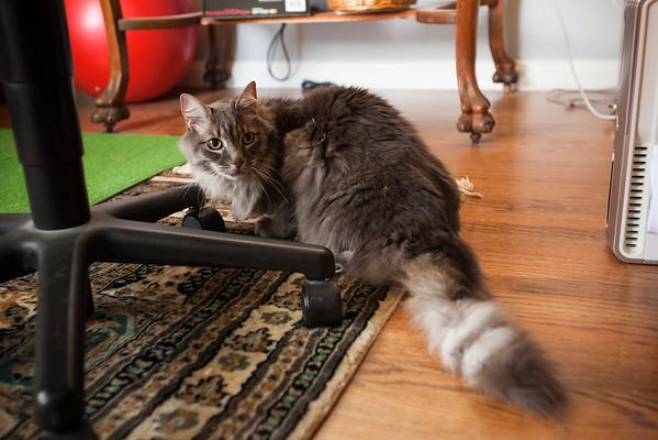 Meeko inspects the office