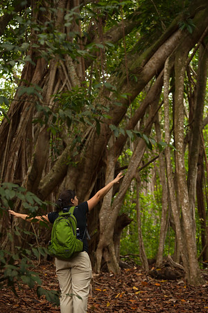 Jaclyn describes how a Banyan Tree spreads