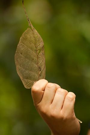 This dead leaf has an interesting translucent skeleton