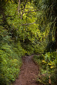The trail is mostly dry, but gets quite muddy in some of the more shady spots