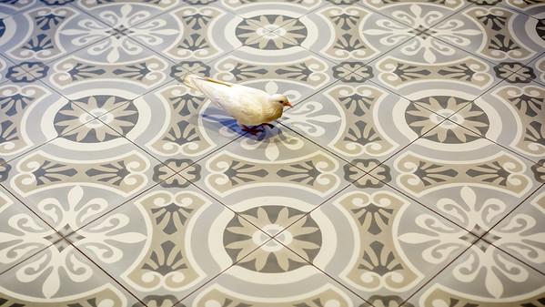 When doves...come inside a coffee shop