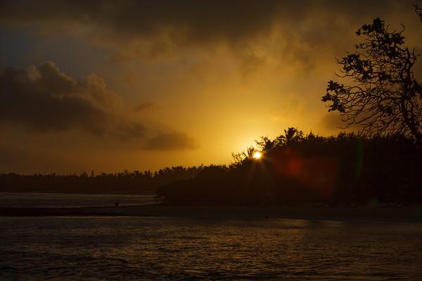 Sun rises between trees