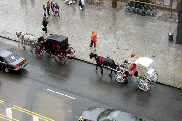 Ritz (view) - horse carriages (afternoon)