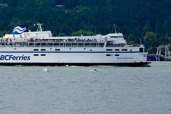 The ferry's passengers are obviously out on deck whale watching today