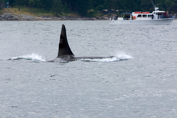 Another male passes really close to shore