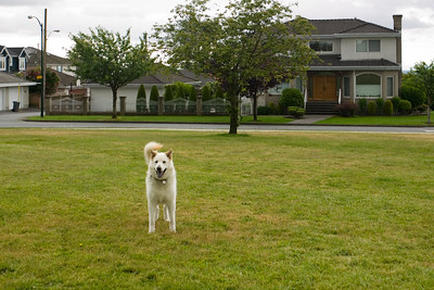 Yogi reaches a big open field
