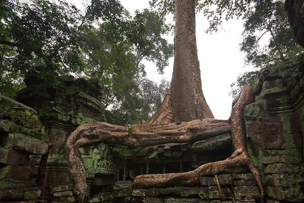 This tree's roots dominate the architecture