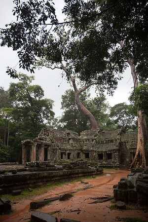 The east gate of Ta Prohm.  This temple is overgrown like Beng Mealea, but built in the Bayon style by King Jayavarman VII.  Unlike the temple mountains of Angkor Wat and Bayon, this Khmer temple is flat.