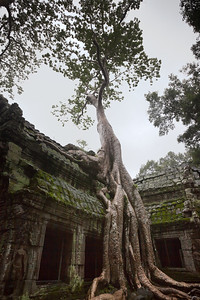 I risk getting the lens wet again to capture another shot of the full tree growing upon Ta Prohm's east entrance...and it is a good thing I brought lens tissues with me