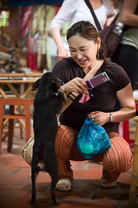 The puppy begs from a tourist