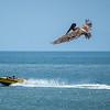 When pelicans attack