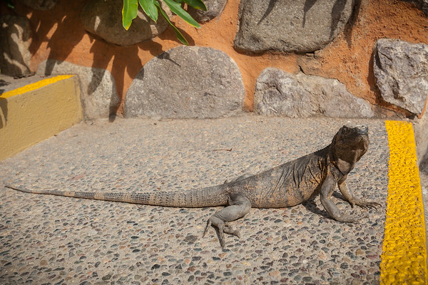 There are also some big lizards lurking in the area