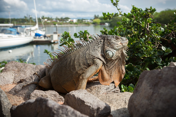 A staff member points out the presence of an iguana on a nearby stone wall